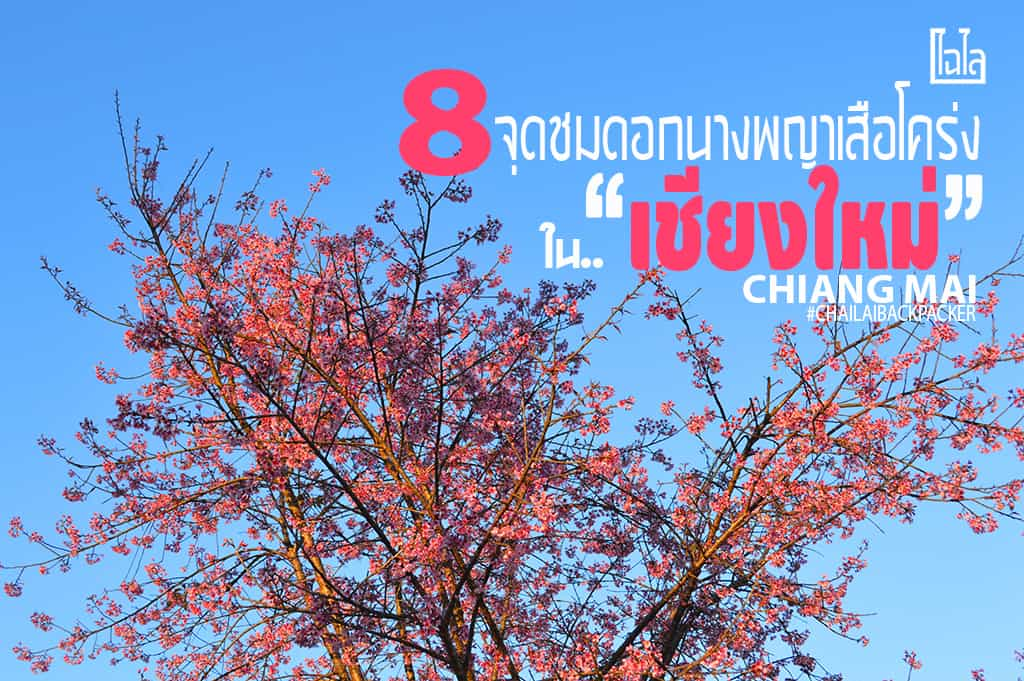 Chiang Mai Pink (34)