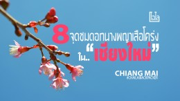Chiang Mai Pink (35)