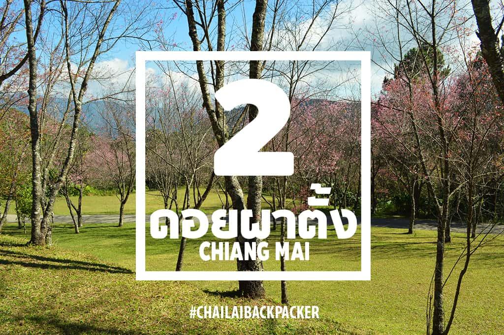 Chiang Mai Pink (6)