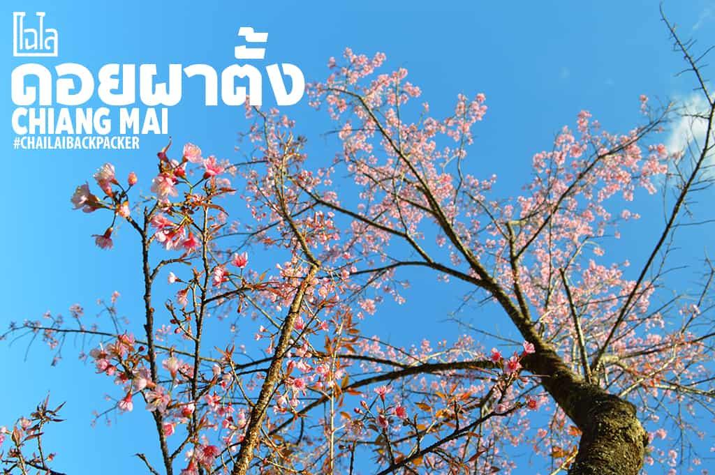 Chiang Mai Pink (7)