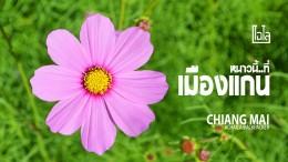 Cover Muangkaen Chiangmai