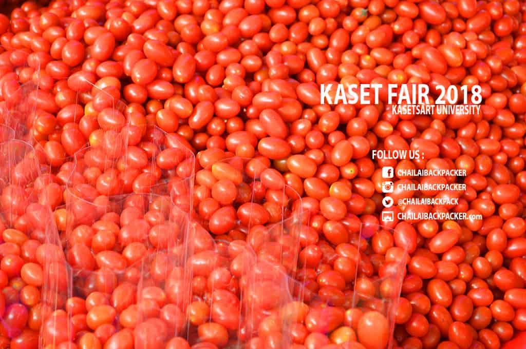 Kaset Fair 2018 (99)