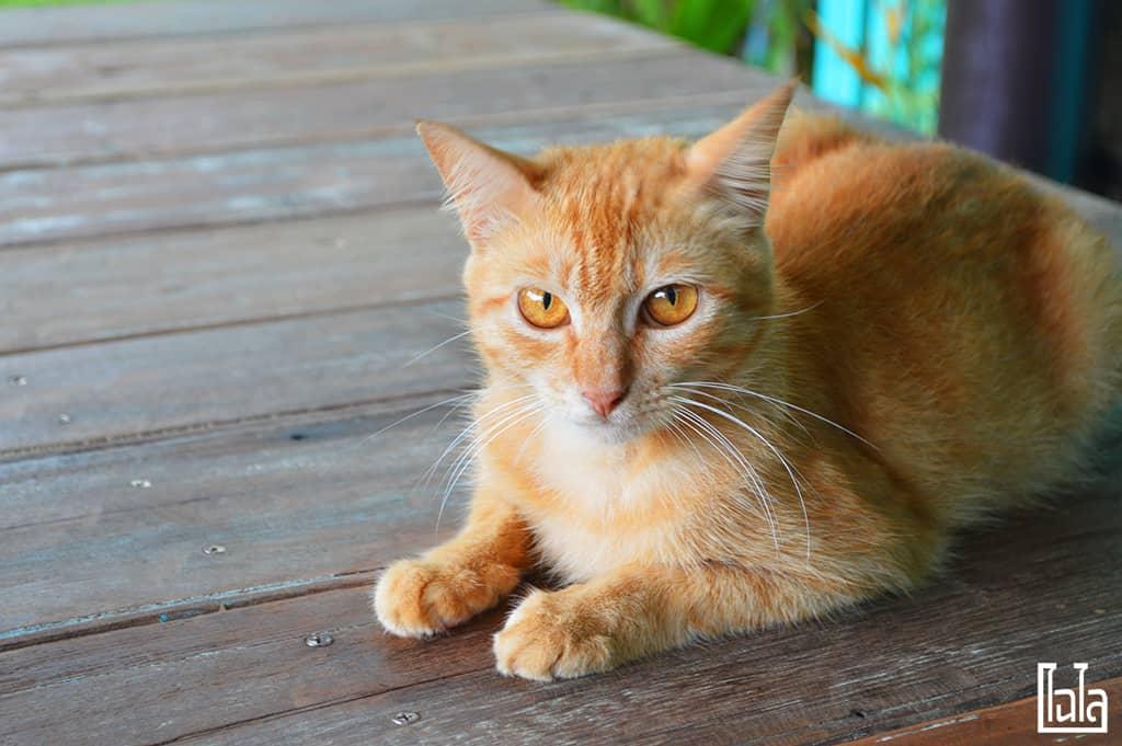 Koh Klang - Krabi (17)