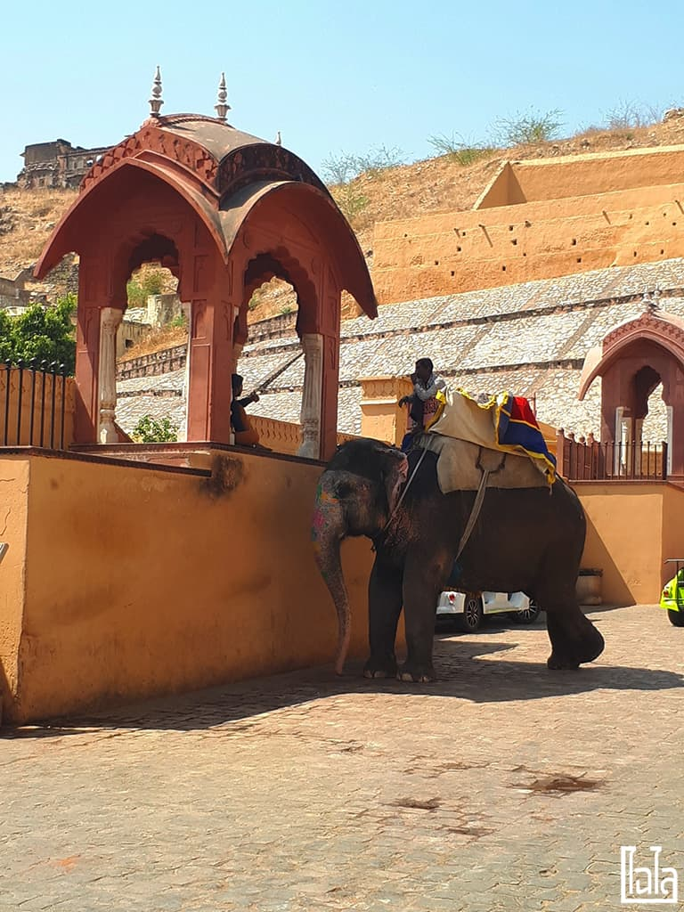 Jaipur India (38)