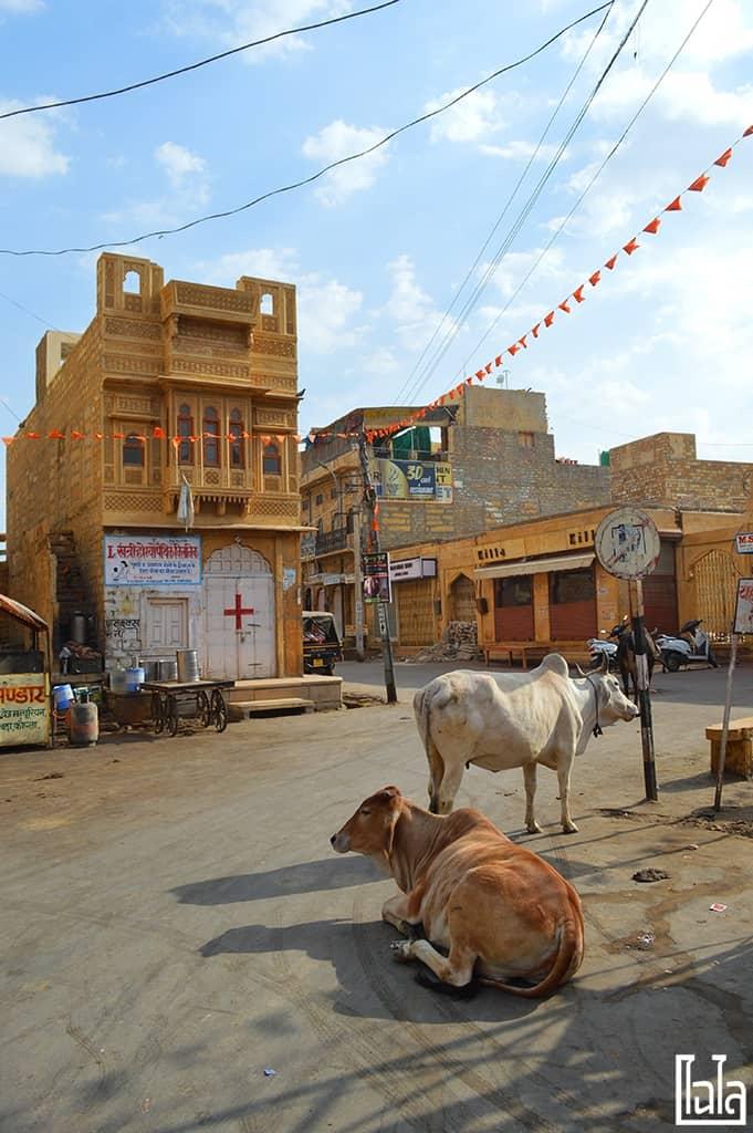 Jaisalmer India (14)
