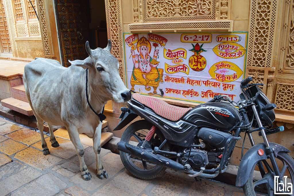 Jaisalmer India (15)