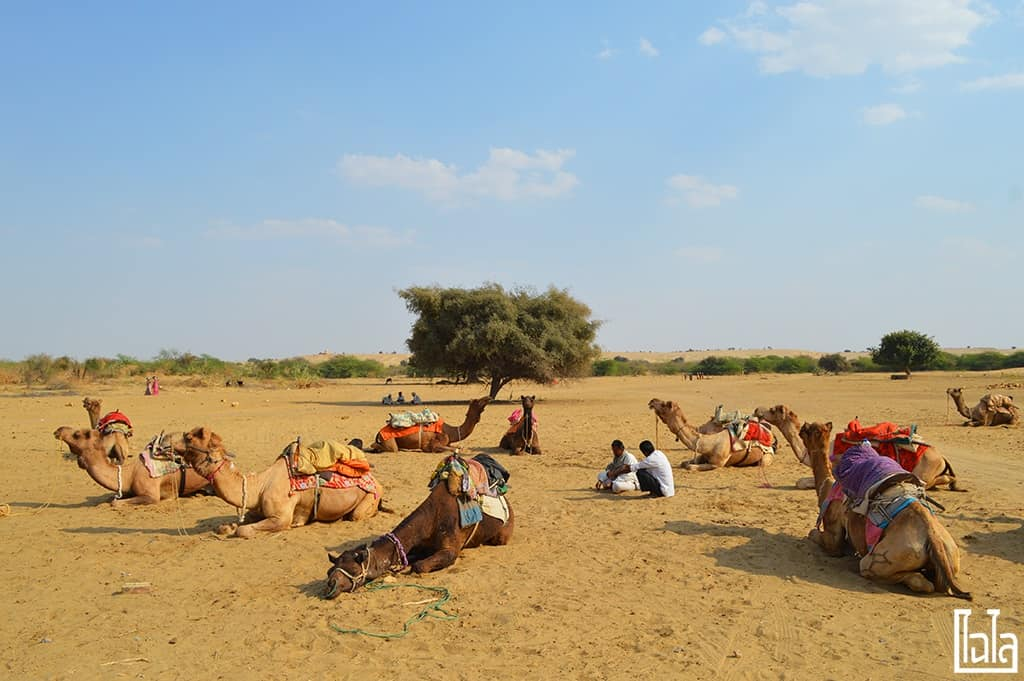 Jaisalmer India (39)