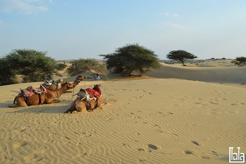 Jaisalmer India (47)