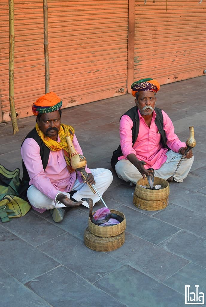 Rajasthan India (26)