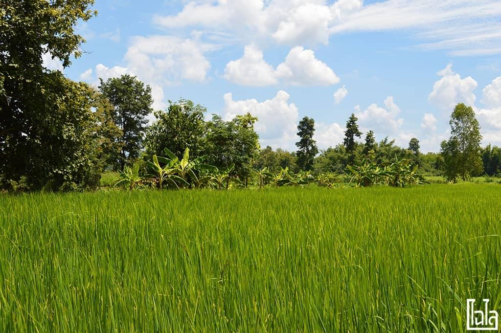 Nong San Sakon Nakhon (18)