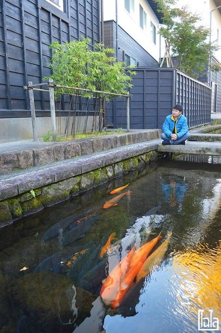 คลองปลาคาร์ฟ HidaFurukawa